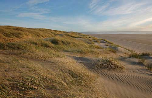 Braunton Burrows2